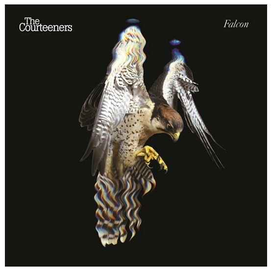 Courteeners, The - Falcon